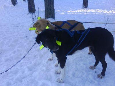 hund2-035.jpg