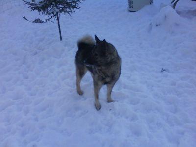 hund2-048.jpg