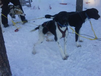 hund2-054.jpg