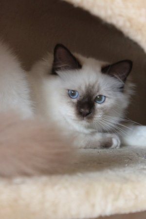 /altona-kittens-euphoria.jpg