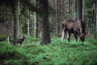 Fotograf av Kurt-Lennart Holmgren
