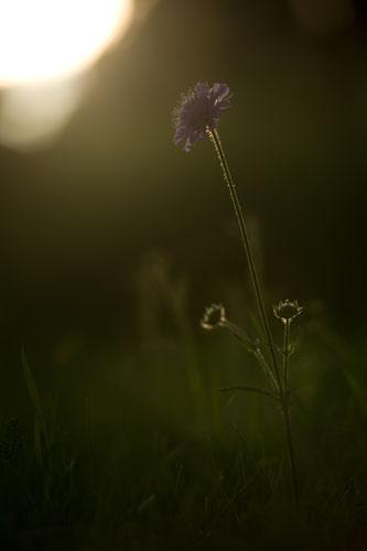 blommor-i-motljus.jpg