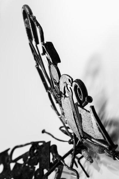 fjaril-svartvit.jpg