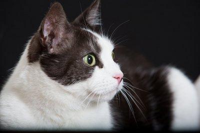 /katten-elis_2.jpg