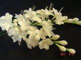 jasmin made of flowerpaste