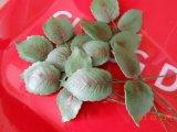 sugarpaste rose leafs