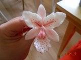 pink orkide