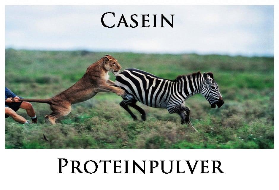 Kasein Protein