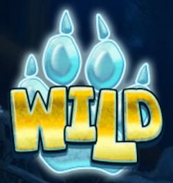 Wild Wolf Cub