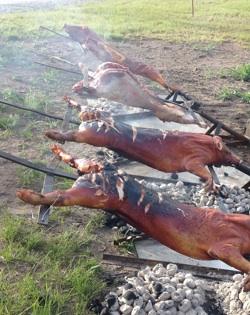 catering helstekt gris
