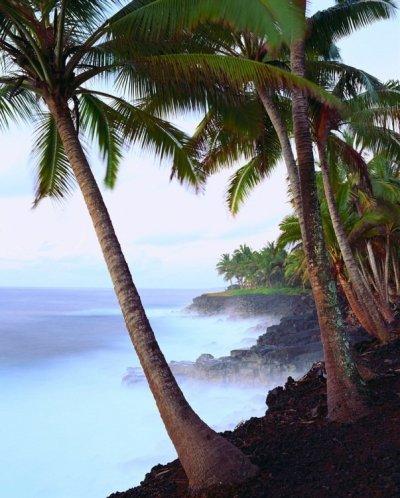 palmkust.jpg