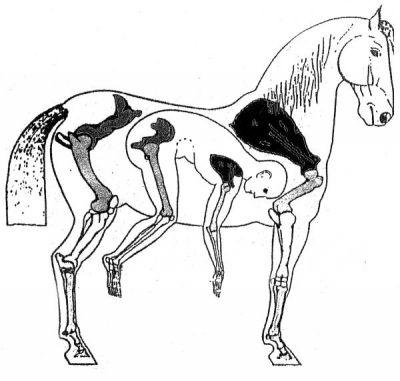 horse-man-skelett-600.jpg