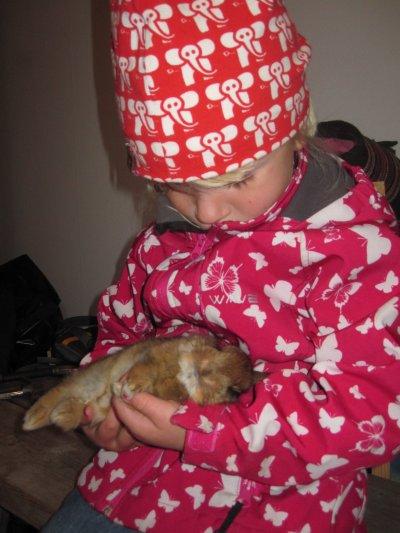 kaninsorg-003.jpg
