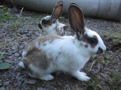 kaniner-006.jpg