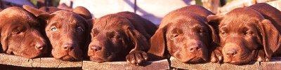 dogs-puppies-2135-800x200.jpg