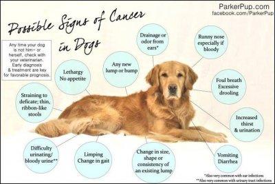 /cancer-tecken.jpg