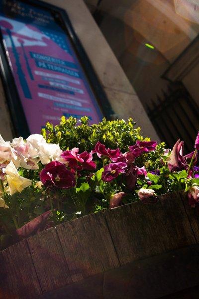 mosebacke-blommor-affisch.jpg