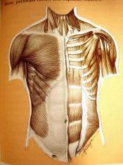 massagebild-1.jpg