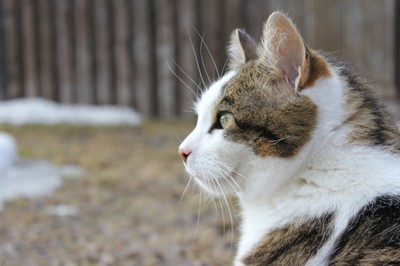 katten-nisse-spanar