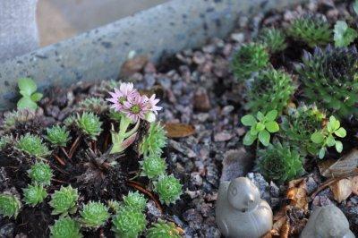 Blommande taklök /november-2014-007.jpg
