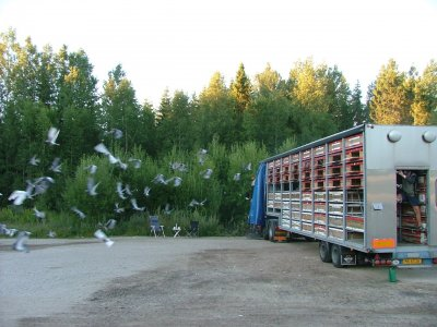 4000 Danska duvor släps i Bahult 2008