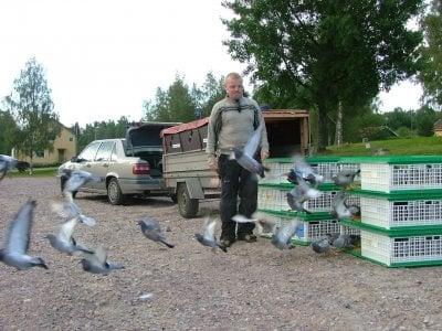 Daniel och Lars släpper 10 dist. duvor i Lesjöfors