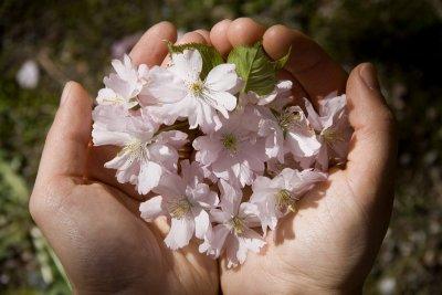 Blommor i händerna