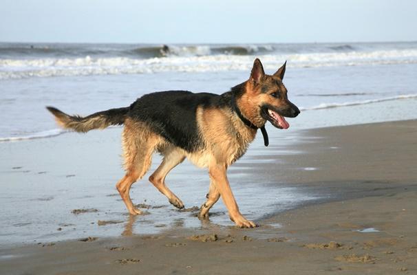 För hundar med energi