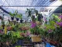 orkideer.jpg
