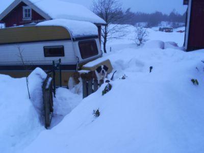 Sally i snön