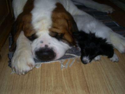 Lufsen och Napoleon sover gott! :)