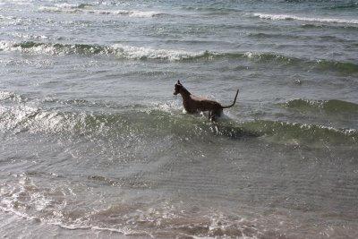 stranden-m-alla-025.jpg