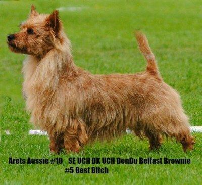 /dendu-belfast-brownie-arets-aussie-2014.jpg