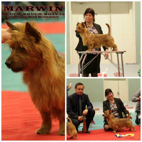/marwin-champion.jpg