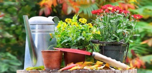 Plantering i krukor