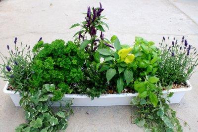 Läkeväxter blandat med blommor