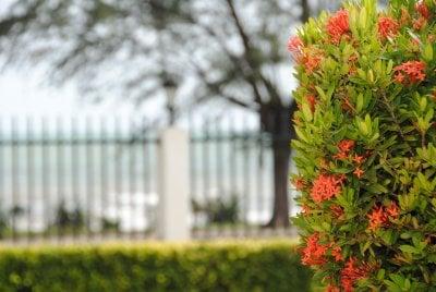 buske-rod.jpg