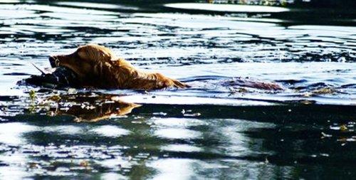 swim-copy-copy-800x404.jpg