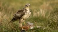 Vinnarbilden tema fågelfotografi Måns Löfgren blev vinnaren i Naturfotomagasinets tävling med tema fågelfotografi med bilden ovan. Som vanligt intervjuar vi vinnaren för att ta reda på hur, var och när […]
