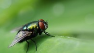 Vetenskapen kopierar naturen - Makromotiv ur lite andra synvinklar Vilken fotograf har inte närmat sig en fluga sakta och försiktigt? Eller krupit fram på ömma knän mot en trollslända och […]