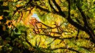 Veckans bild (42) Denna veckans bild har Martin Wahlborg fotograferat. Här följer berättelsen om bilden. Fotot är taget en solig höstdag under en stor Alm i Botaniska trädgården i Göteborg. […]