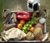 Några grönsaker