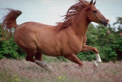 running-horse.jpg