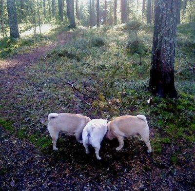 rumpor-i-skog.jpg
