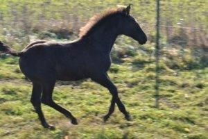 frizzlan-2011-10-16-b.jpg