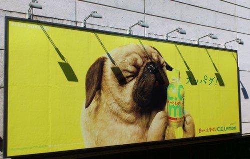 Skyltbelysning-hund