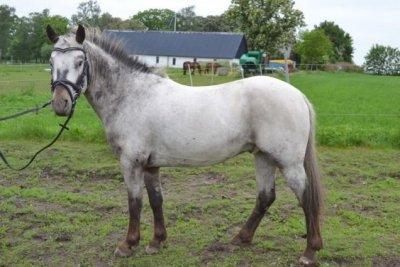/pony.jpg