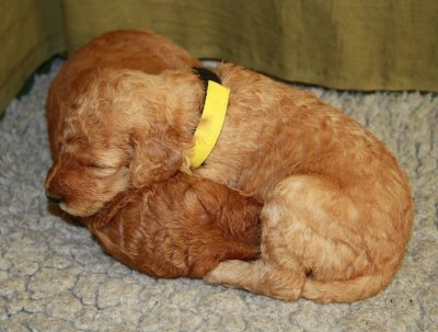 gulan-sover.jpg
