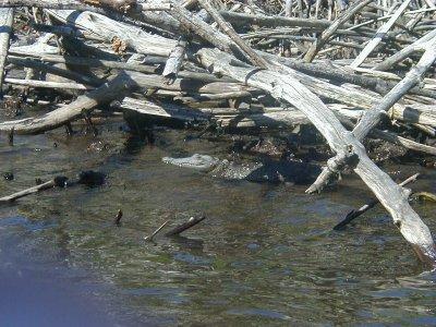 krokodill.jpg