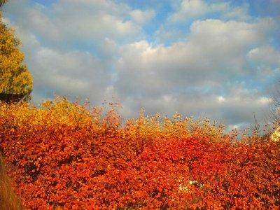 carls-natur-orange.jpg